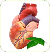 Neem and Heart Disease