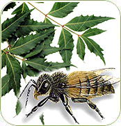 Neem and Honey Bees
